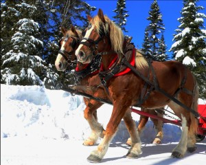 noble-horses-at-work from http://publicdomainpictures.net